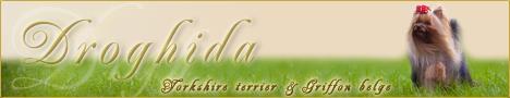 Droghida Yorkshire terrier & Griffon belge